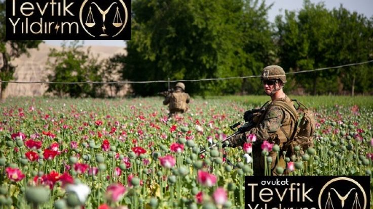 İzinsiz Haşhaş Ekimi Afyon ve Cezası